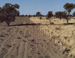 NSWSKN soils and drought